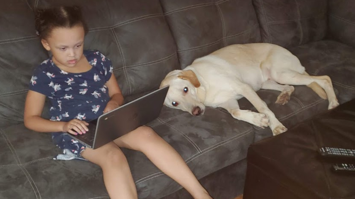 child learning on laptop, seated with pet dog on couch