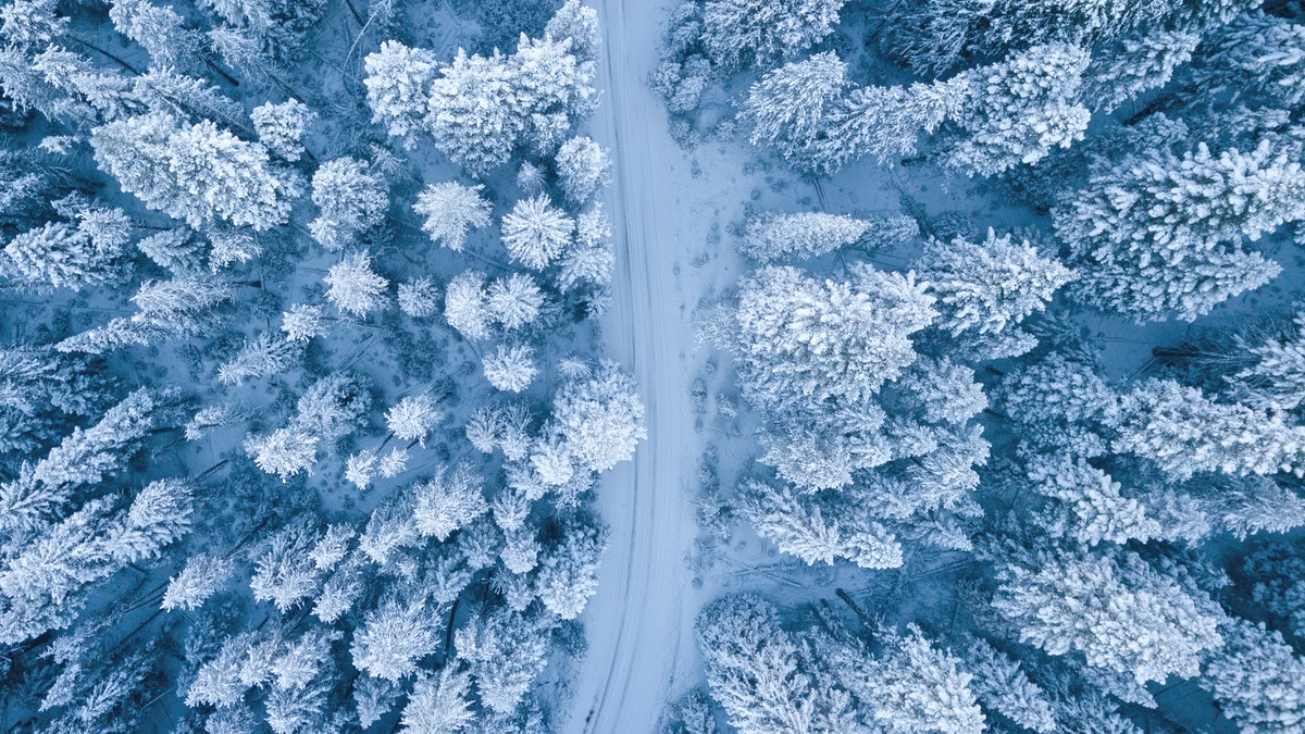winter drone shot trees